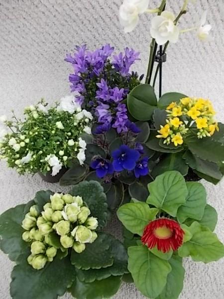 Blühendes in Mini