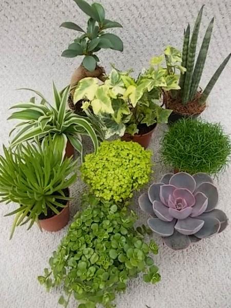 Grünes in Mini