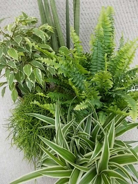 Grünes in Maxi