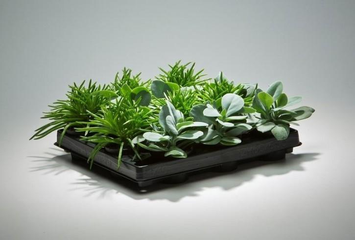 Grünpflanzen-Mix Senecio T 6 MINI