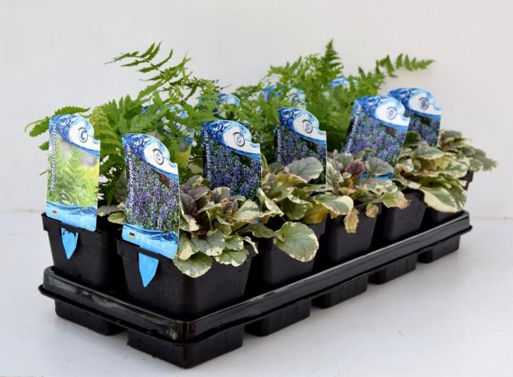 Wasser- & Sumpfpflanzen T 11 Preisgruppe C MIX-Lage