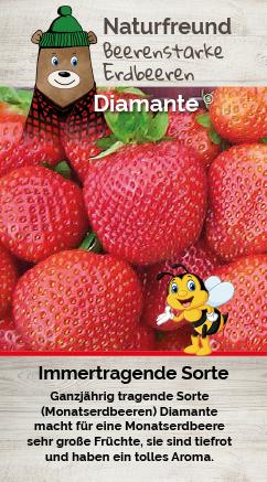 Erdbeere T 9,5 'Diamante®'