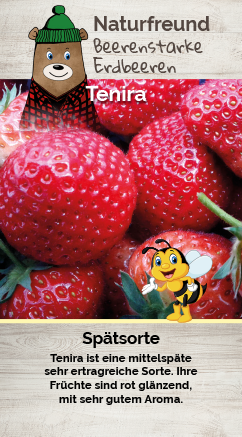 Erdbeere T 9,5 'Tenira'