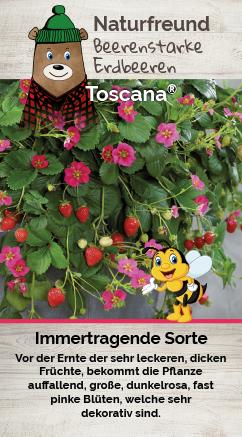 Erdbeere T 9,5 'Toscana®'