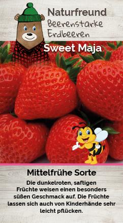 Erdbeere T 9,5 'Sweet Maja'