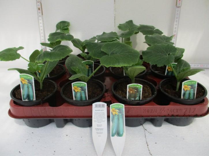 "Zucchini ""Grünfruchtig"" T 9"
