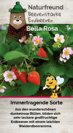 Erdbeere T 9,5 'Bella Rosa'