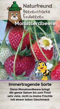 Erdbeere T 9,5 'Monatserdbeere'