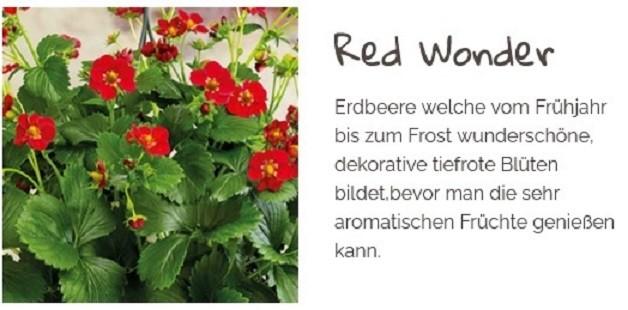 Erdbeere T 9,5 'Red Wonder'