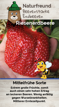 Erdbeere T 9,5 'Riesenerdbeere'