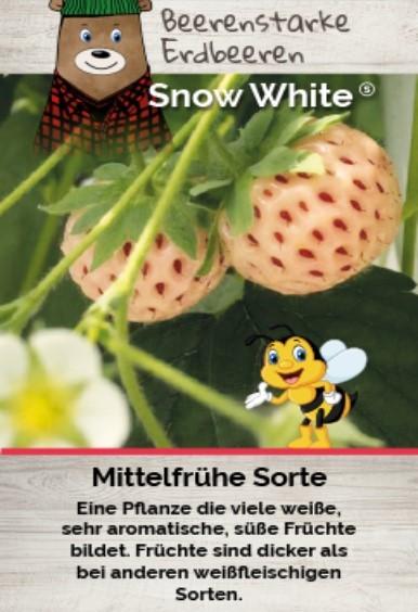 Erdbeere T 9,5 'Snow White'