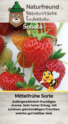 Erdbeere T 9,5 'Sonata'
