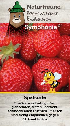 Erdbeere T 9,5 'Symphonie'