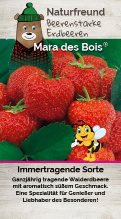 Erdbeere 'Mara Des Bois' T 25 Ampel