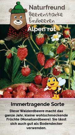 Erdbeere T 9,5 'Alpen rot' (Monatserdbeere)