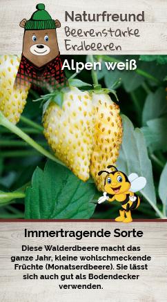 Erdbeere T 9,5 'Alpen weiß' (Monatserdbeere)