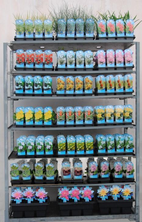 Wasser-  & Sumpfpflanzen T 9 Preisgruppe A MIX-Lage