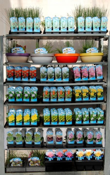 Wasser- & Sumpfpflanzen T 9 Preisgruppe B MIX-Lage