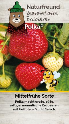 Erdbeere T 9,5 'Polka®'