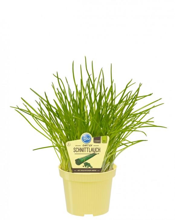 Blu® Bio Allium schoenoprassum T 12 • VE 10