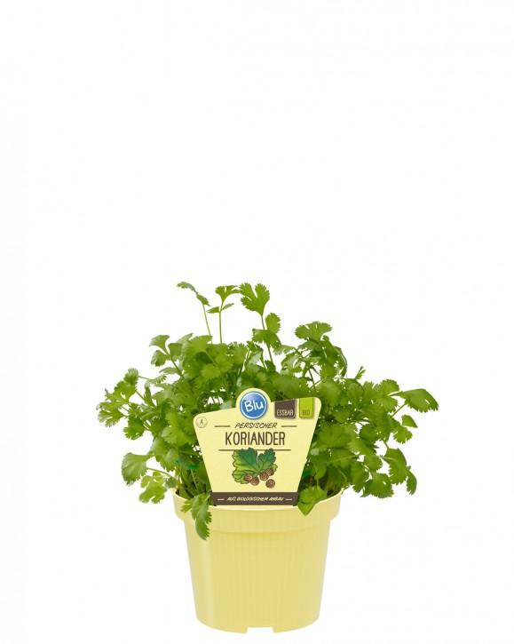 Blu® Bio Coriandrum sativum T 12 • VE 10