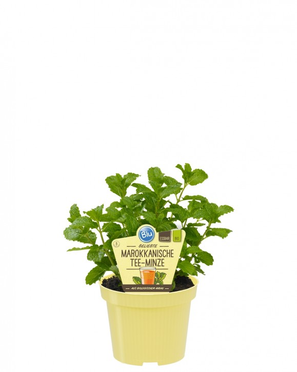 Blu® Bio Mentha spicata var. crispa T 12 • VE 10