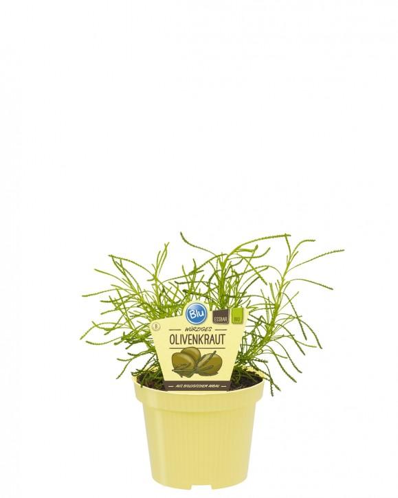 Blu® Bio Santolina viridis T 12 • VE 10