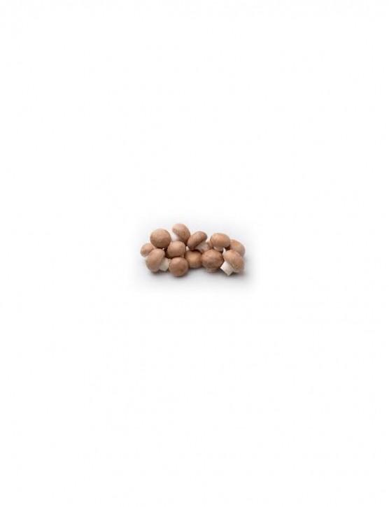 Mini Champ  'braune Champignons'  Heimzuchtset  T 14