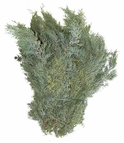 Cupressus arizonica  Schnittgrün Handbund 350g