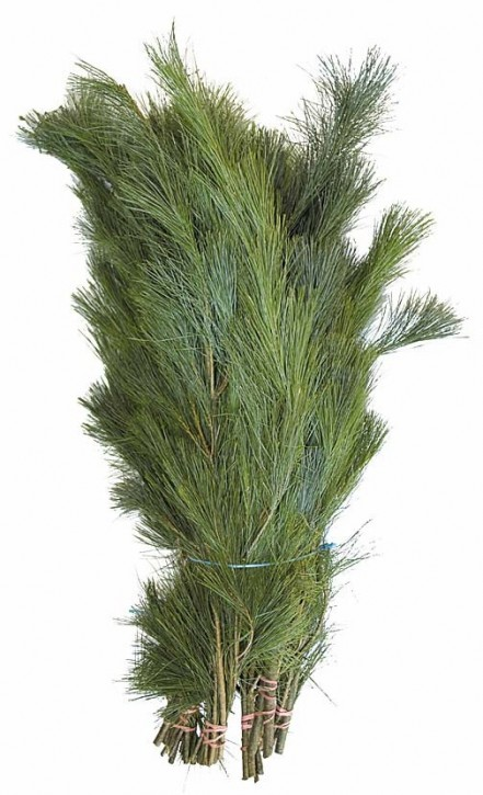 Pinus strobus   Schnittgrün Handbund 500g