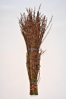 Salix caprea   Handbund   80 cm    10 Stiele