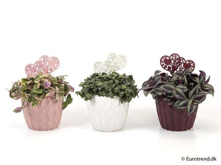 Grünpflanzen  MIX   T 10,5  Keramiktopf mit Dekorsteckern