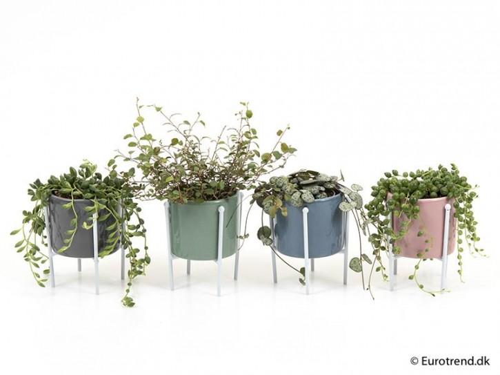 Grünpflanzen  MIX   T 6  Keramik-Dekotopf mit Metallbeinen