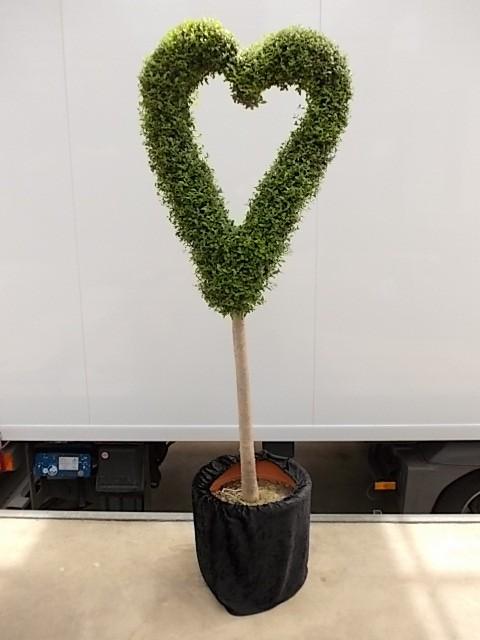 Leihpflanze Liguster Herz 160 cm mit schwarzer Husse