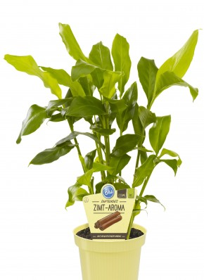 Blu® Bio Elettaria cardamomum T 12 • VE 7