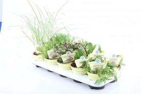 Blu® Bio Gartenkräuter MIX T 12 • VE 10