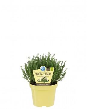 Blu® Bio Thymus vulgaris T 12 • VE 10